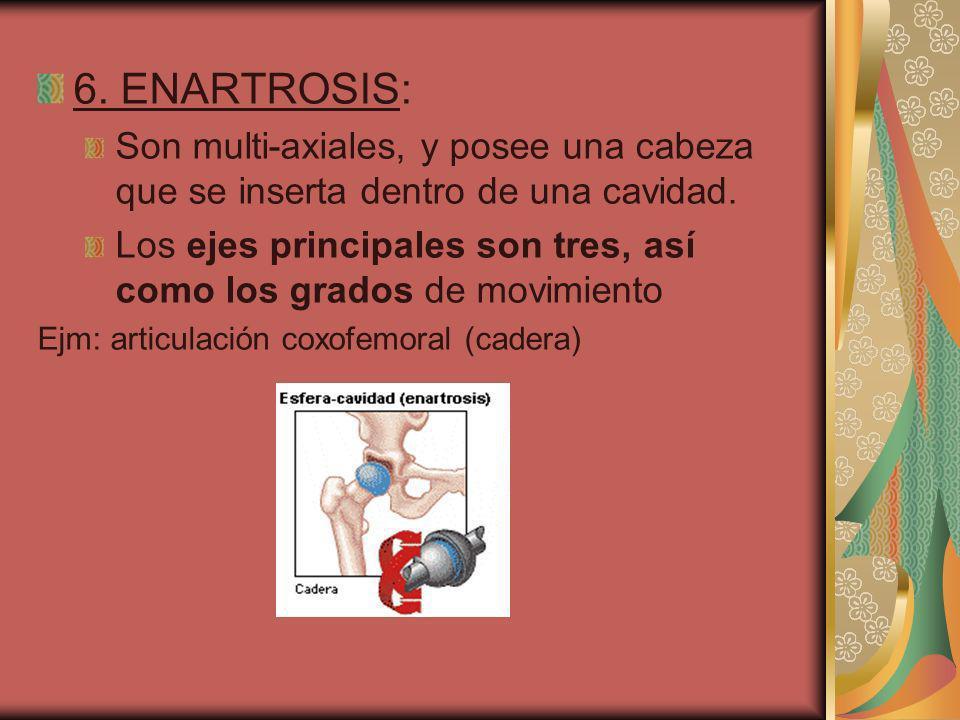 6. ENARTROSIS: Son multi-axiales, y posee una cabeza que se inserta dentro de una cavidad.