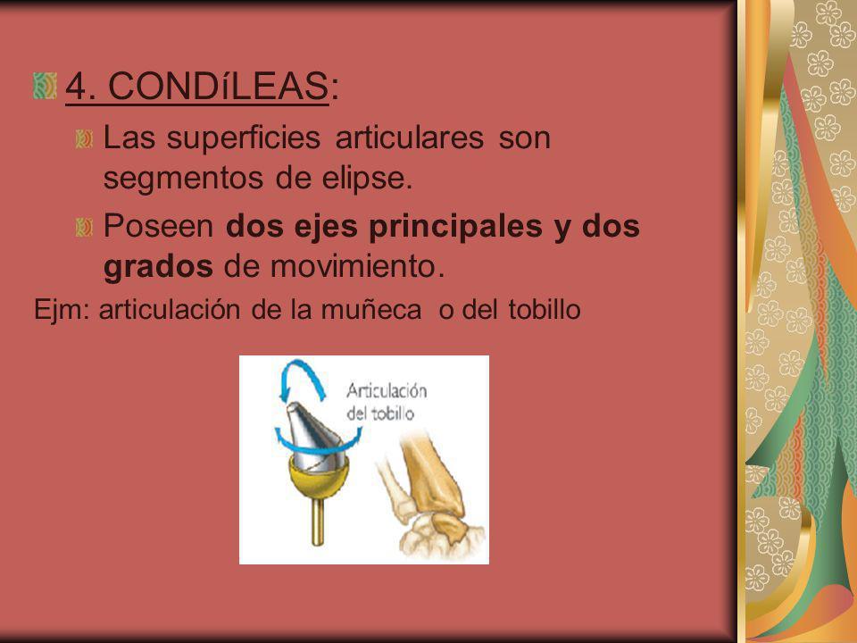 4. CONDíLEAS: Las superficies articulares son segmentos de elipse.