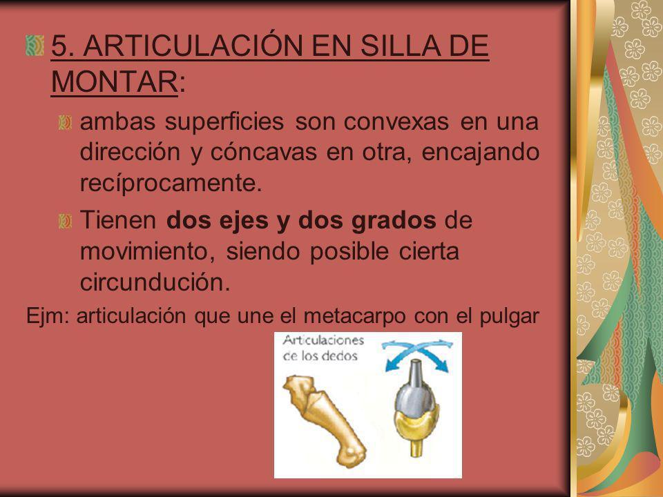 5. ARTICULACIÓN EN SILLA DE MONTAR: