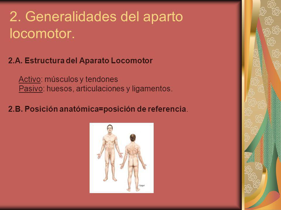 2. Generalidades del aparto locomotor.