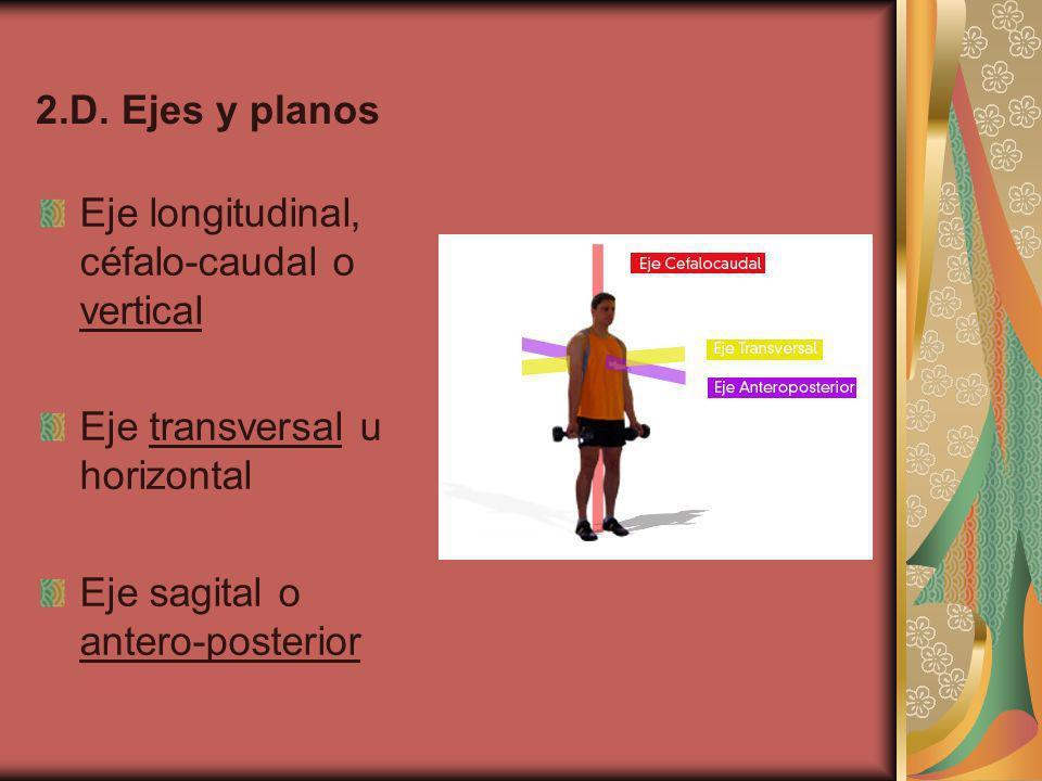 2.D. Ejes y planos Eje longitudinal, céfalo-caudal o vertical.