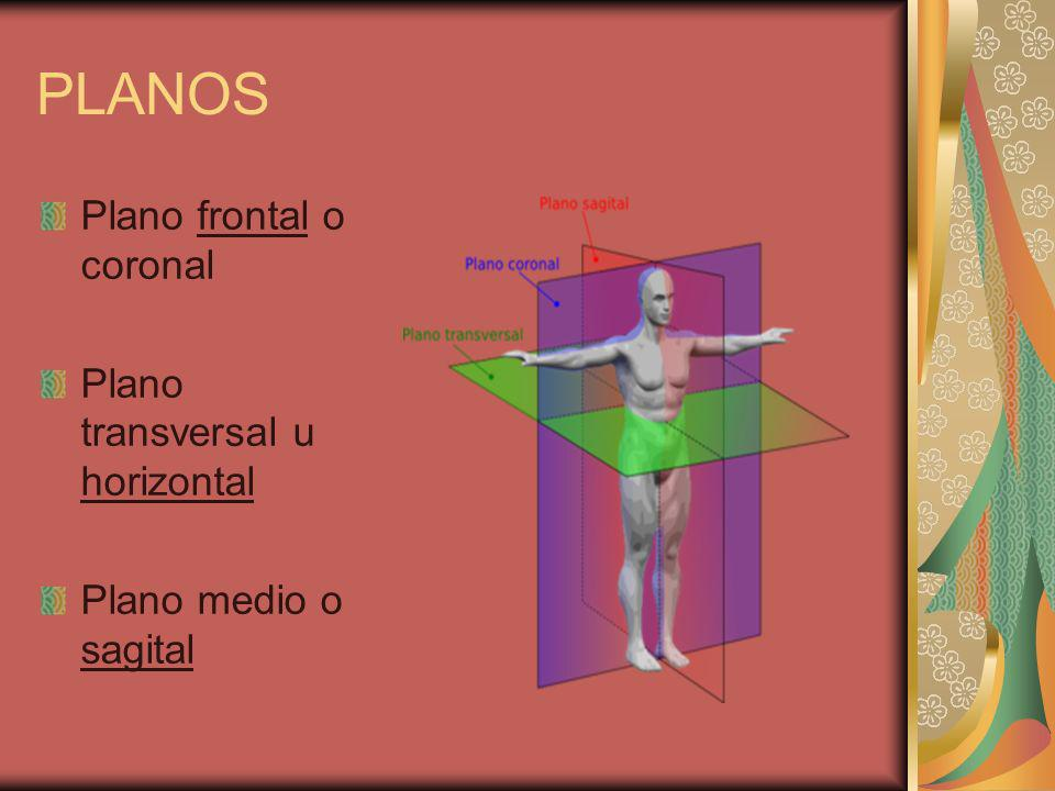 PLANOS Plano frontal o coronal Plano transversal u horizontal