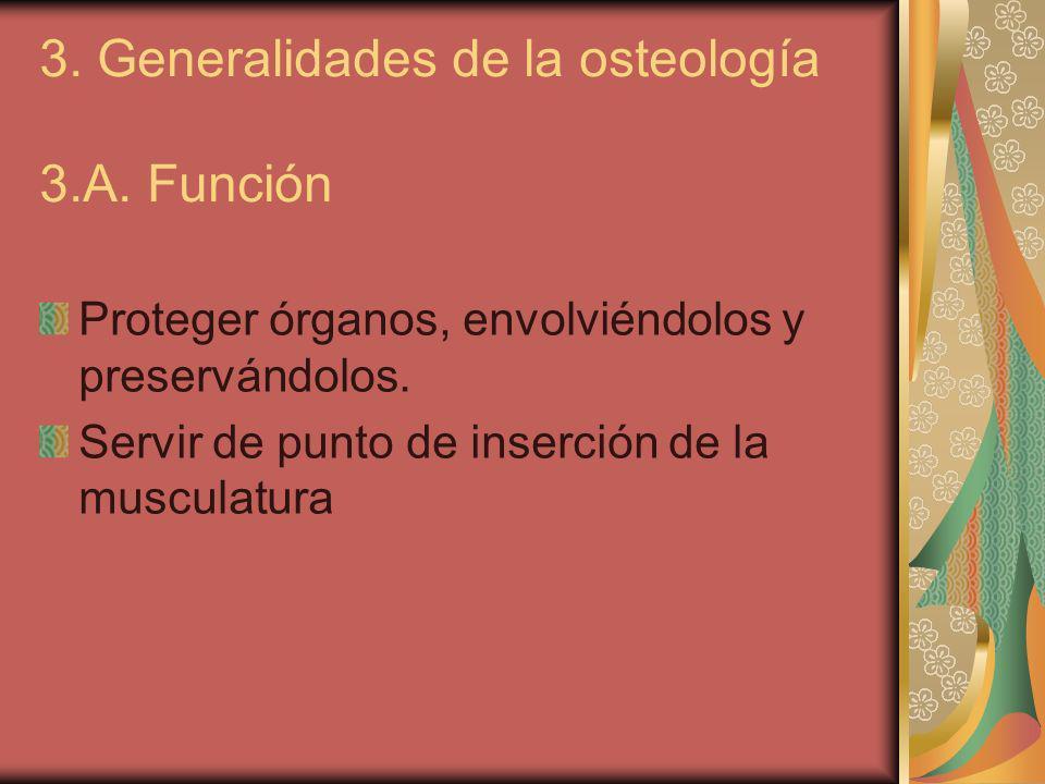 3. Generalidades de la osteología 3.A. Función