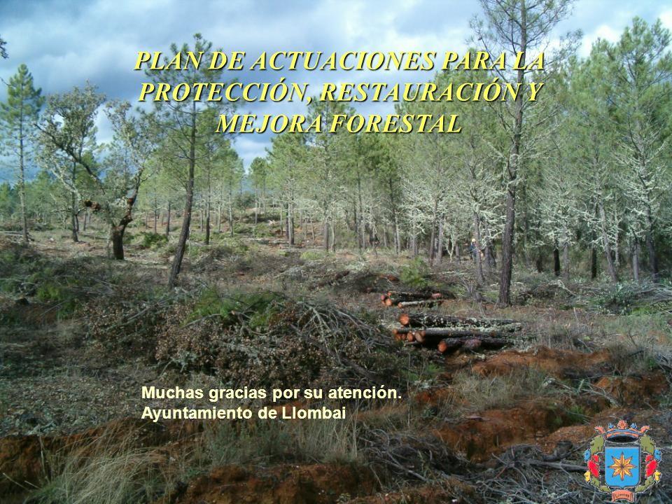 PLAN DE ACTUACIONES PARA LA PROTECCIÓN, RESTAURACIÓN Y MEJORA FORESTAL