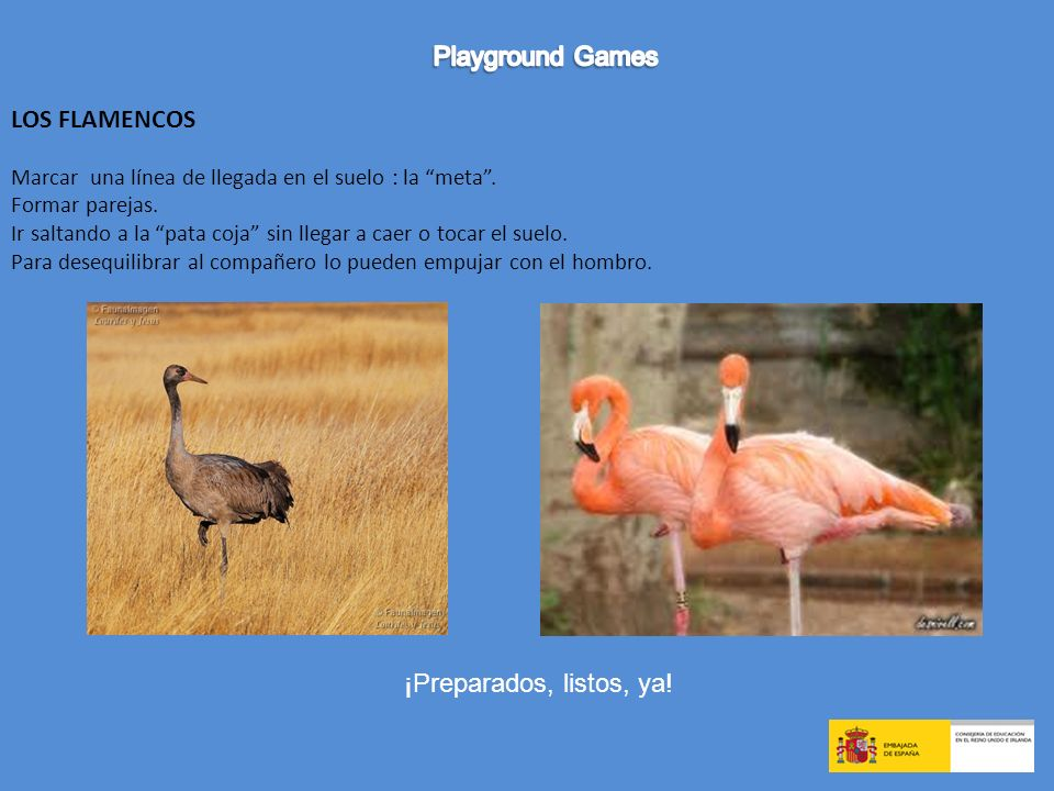 Playground Games LOS FLAMENCOS ¡Preparados, listos, ya!