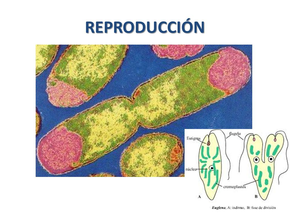 Autotrofos fotosinteticos y quimiosinteticos 88