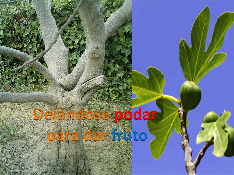 Dejándose podar para dar fruto