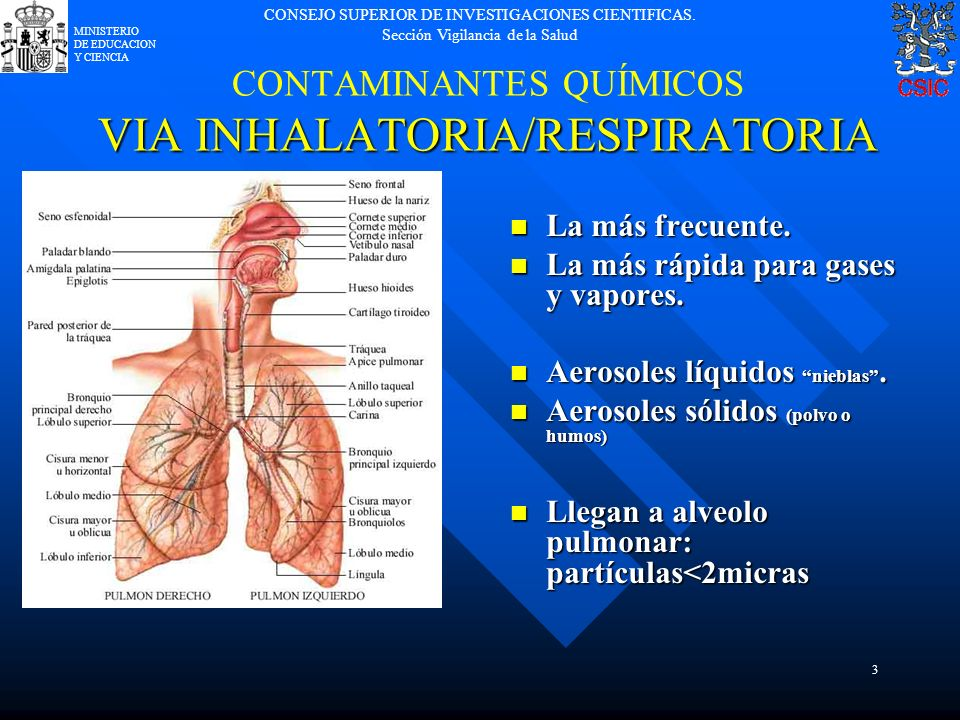 CONTAMINANTES QUÍMICOS VIA INHALATORIA/RESPIRATORIA