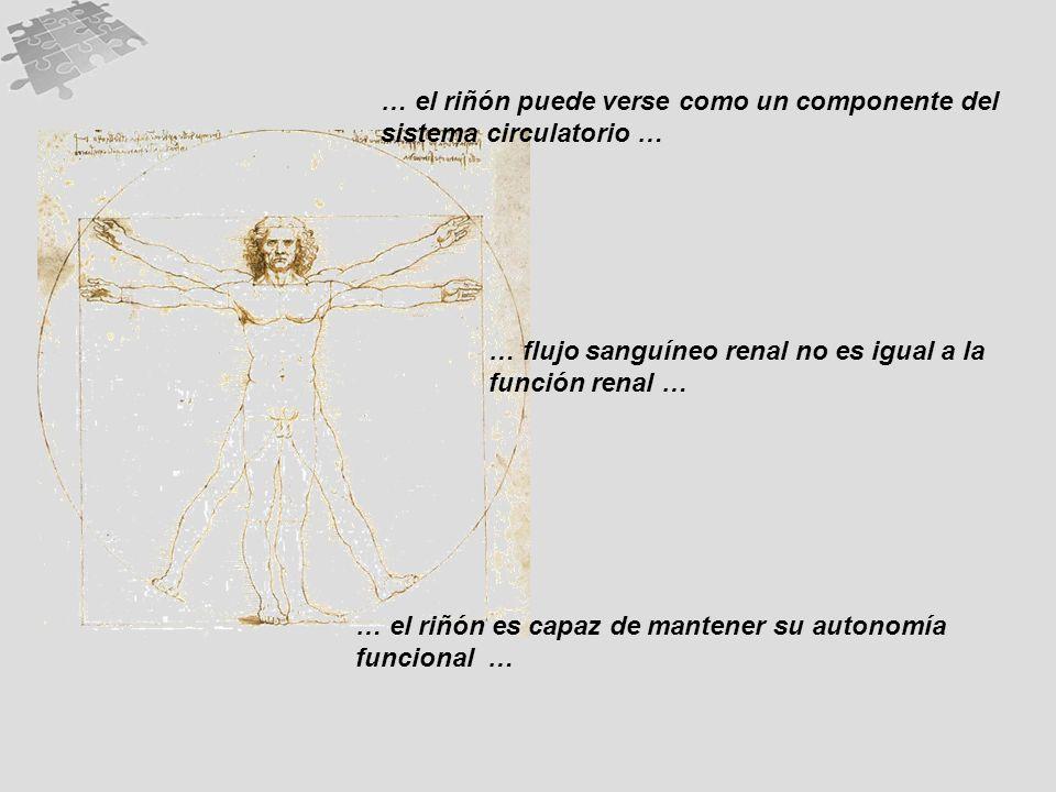 … el riñón puede verse como un componente del sistema circulatorio …