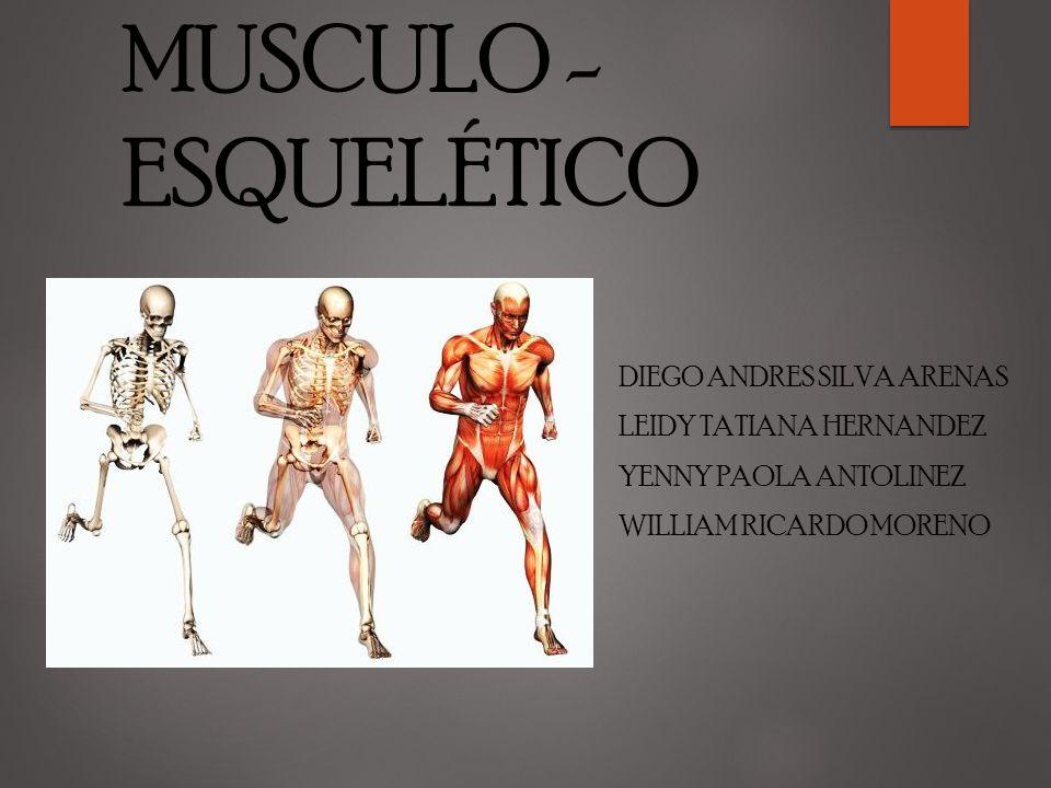 ALTERACIONES DEL SISTEMA MUSCULO - ESQUELÉTICO - ppt video online ...