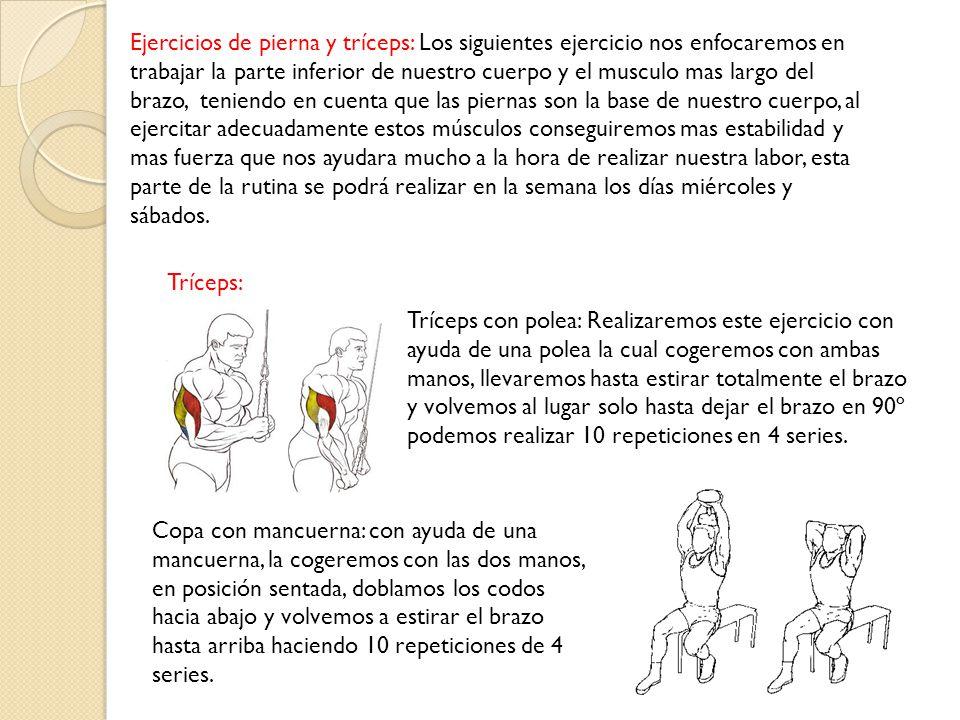 Ejercicios de pierna y tríceps: Los siguientes ejercicio nos enfocaremos en trabajar la parte inferior de nuestro cuerpo y el musculo mas largo del brazo, teniendo en cuenta que las piernas son la base de nuestro cuerpo, al ejercitar adecuadamente estos músculos conseguiremos mas estabilidad y mas fuerza que nos ayudara mucho a la hora de realizar nuestra labor, esta parte de la rutina se podrá realizar en la semana los días miércoles y sábados.