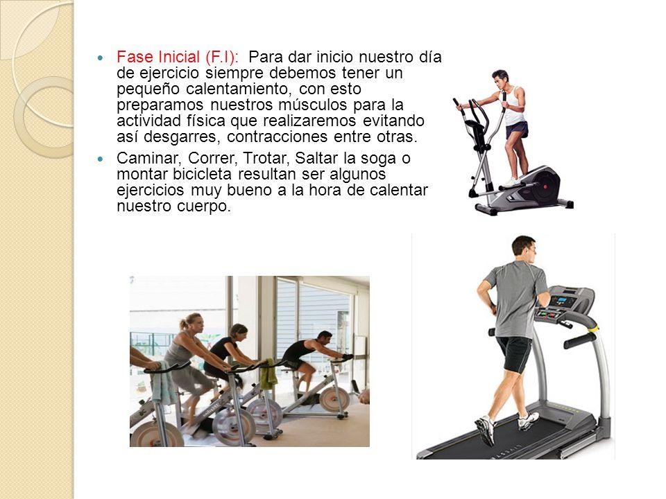 Fase Inicial (F.I): Para dar inicio nuestro día de ejercicio siempre debemos tener un pequeño calentamiento, con esto preparamos nuestros músculos para la actividad física que realizaremos evitando así desgarres, contracciones entre otras.