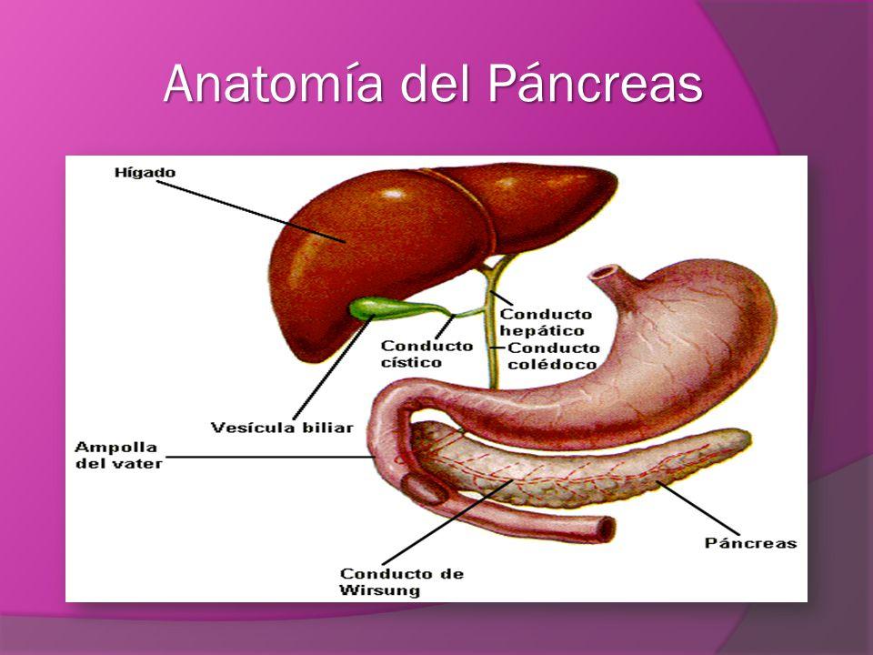 Lujoso Anatomía De La Diabetes Mellitus Modelo - Imágenes de ...