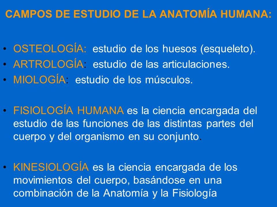 Lujoso Estudio De La Anatomía Y La Fisiología Ornamento - Imágenes ...