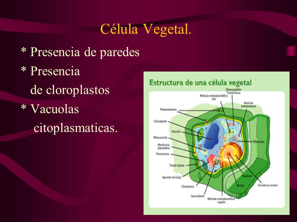 Célula Vegetal. * Presencia de paredes * Presencia de cloroplastos