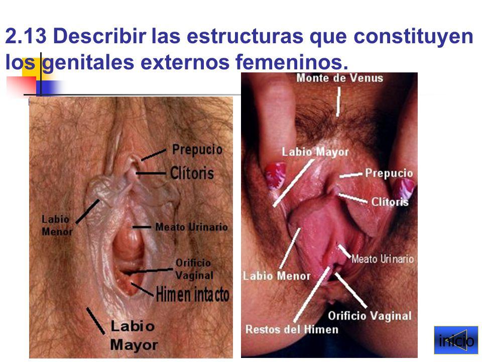 Lujoso Imágenes De Los órganos Internos Femeninos Adorno - Imágenes ...