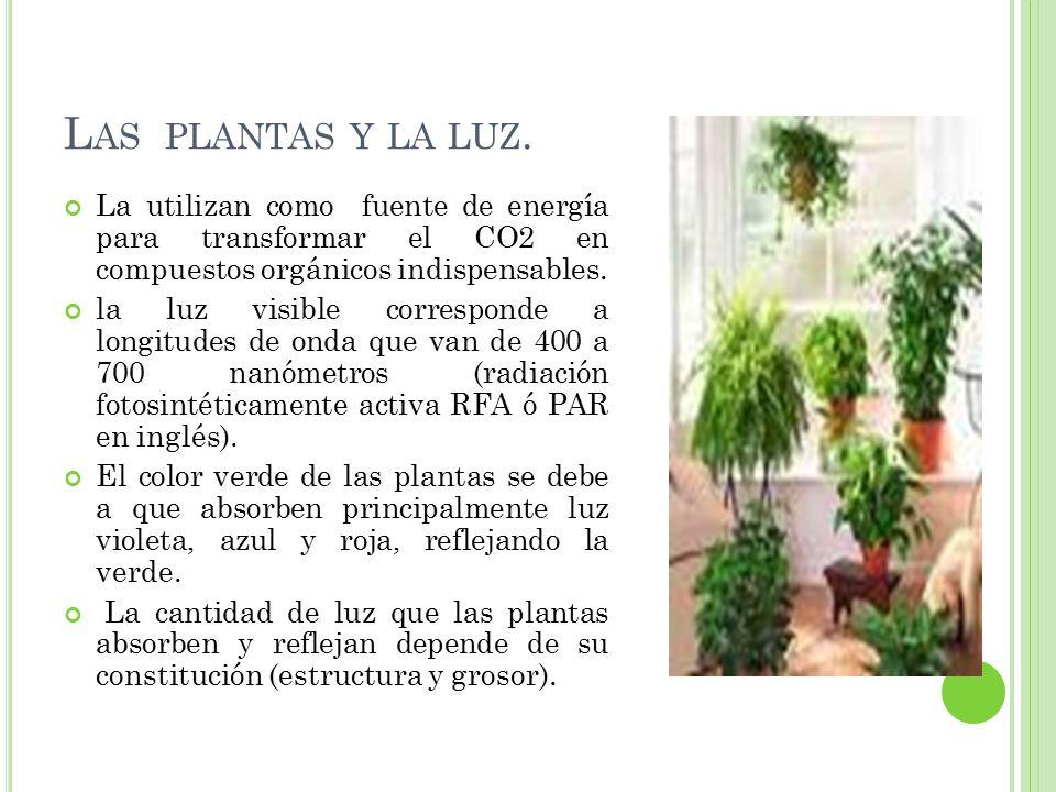 Las plantas y la luz. La utilizan como fuente de energía para transformar el CO2 en compuestos orgánicos indispensables.