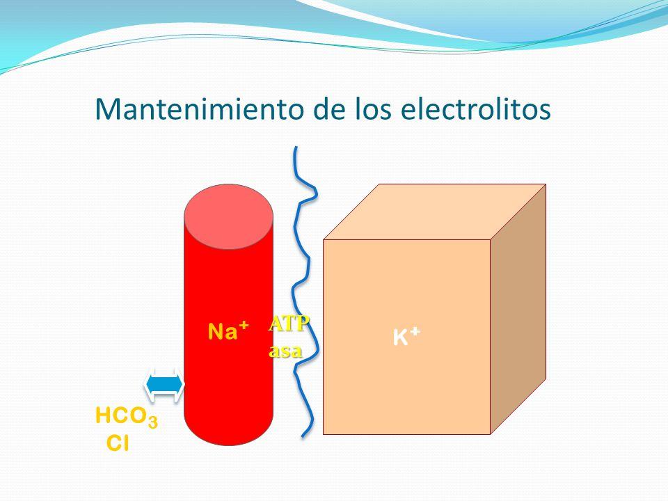 Mantenimiento de los electrolitos