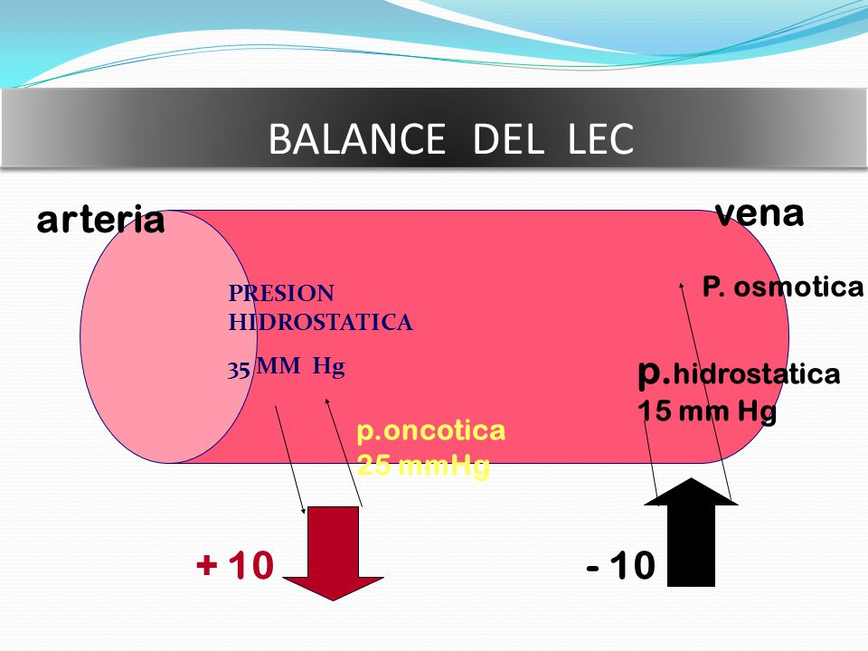 BALANCE DEL LEC vena arteria p.hidrostatica + 10 - 10 P. osmotica
