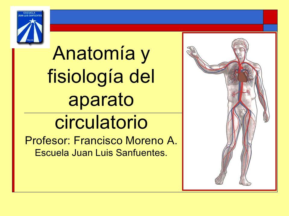 Contemporáneo Anatomía Y Fisiología Juegos Interactivos Foto ...
