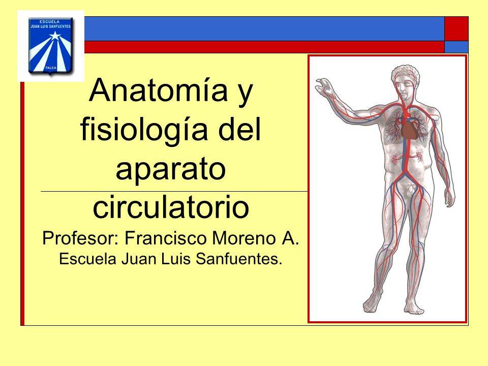Hermosa Profesor De Anatomía Y Fisiología Cresta - Anatomía de Las ...