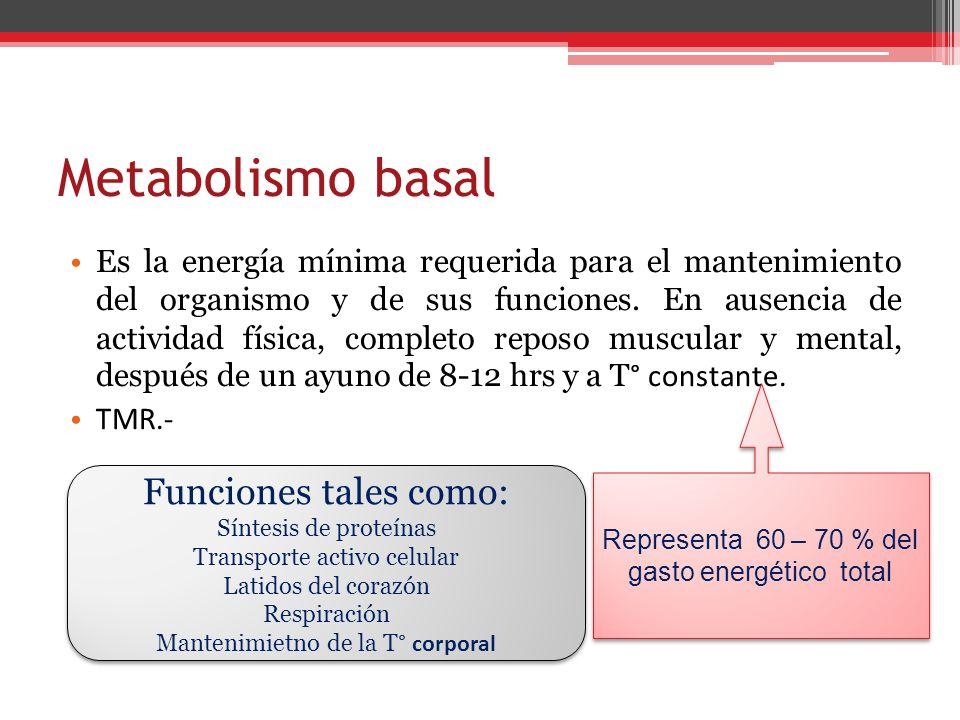 Metabolismo basal Funciones tales como: