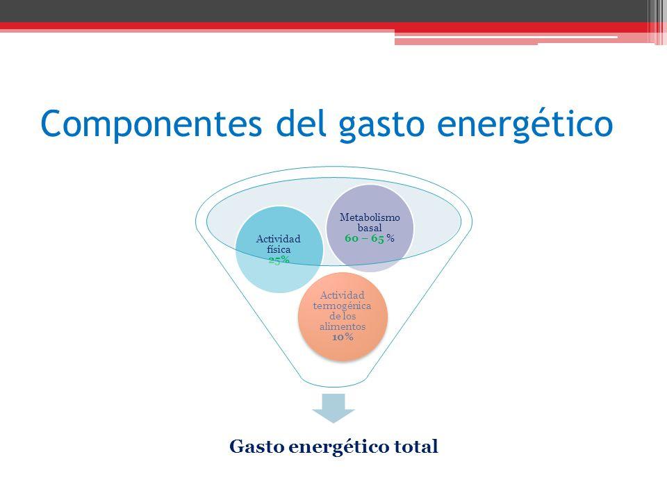 Componentes del gasto energético