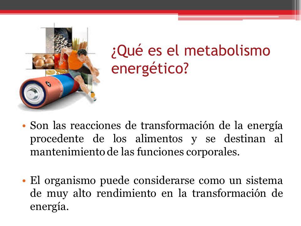 ¿Qué es el metabolismo energético
