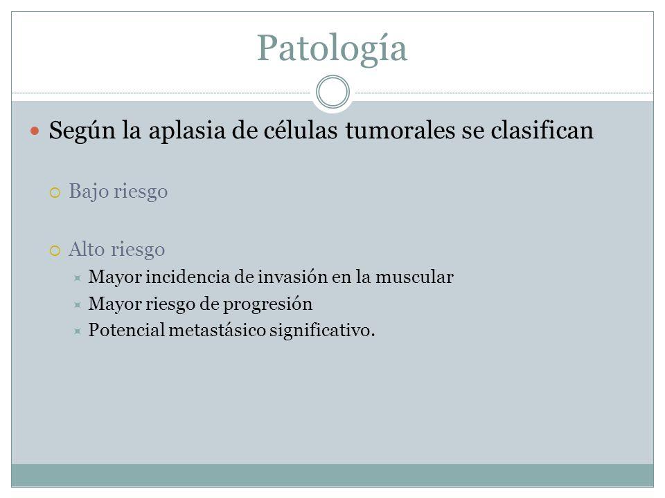 Patología Según la aplasia de células tumorales se clasifican