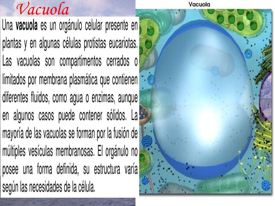 Vacuola