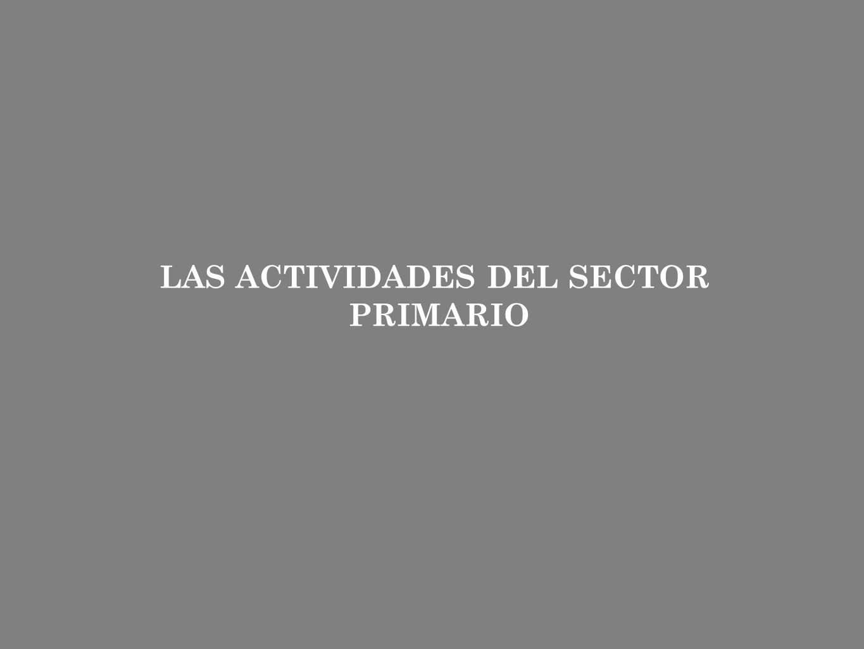 LAS ACTIVIDADES DEL SECTOR