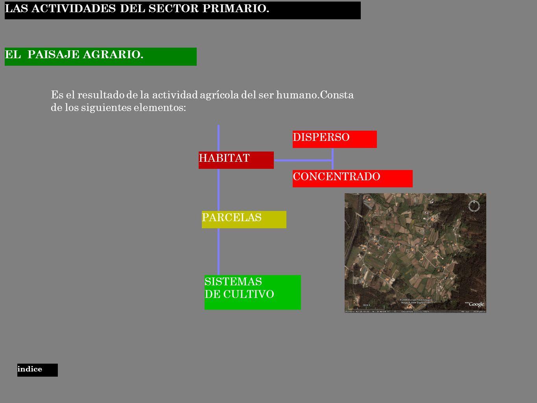 LAS ACTIVIDADES DEL SECTOR PRIMARIO.
