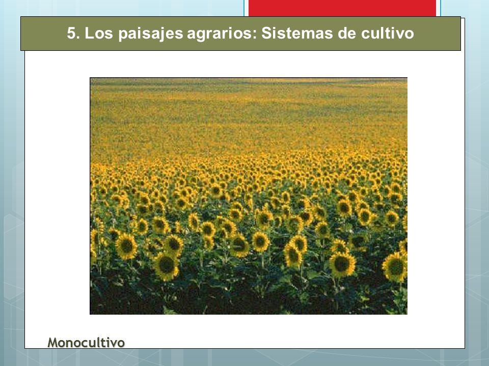 5. Los paisajes agrarios: Sistemas de cultivo