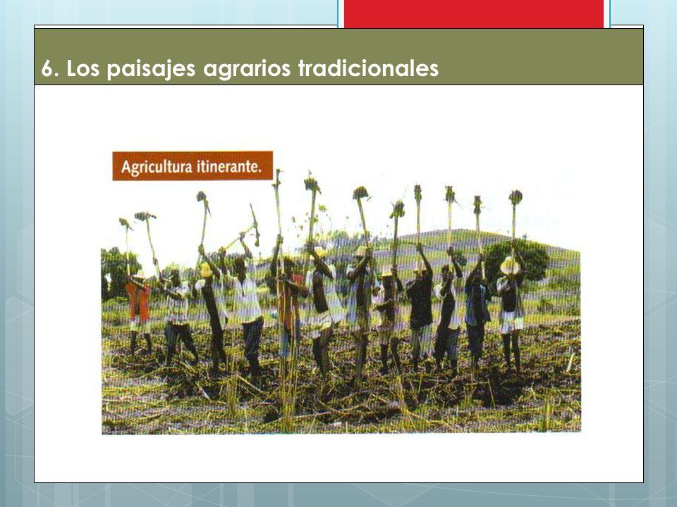 6. Los paisajes agrarios tradicionales