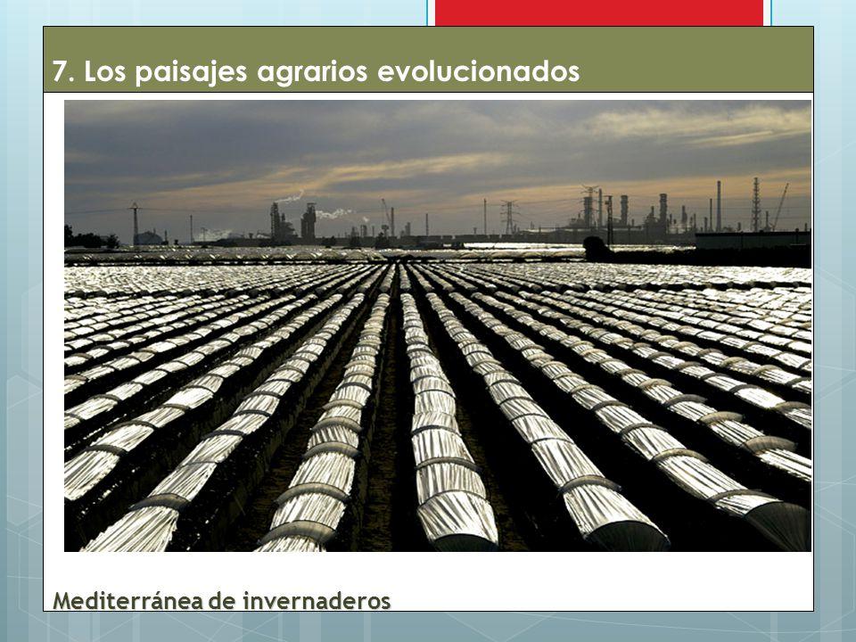 7. Los paisajes agrarios evolucionados