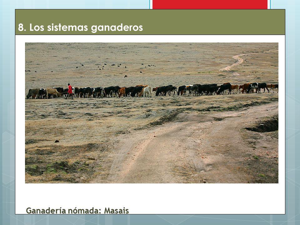 8. Los sistemas ganaderos