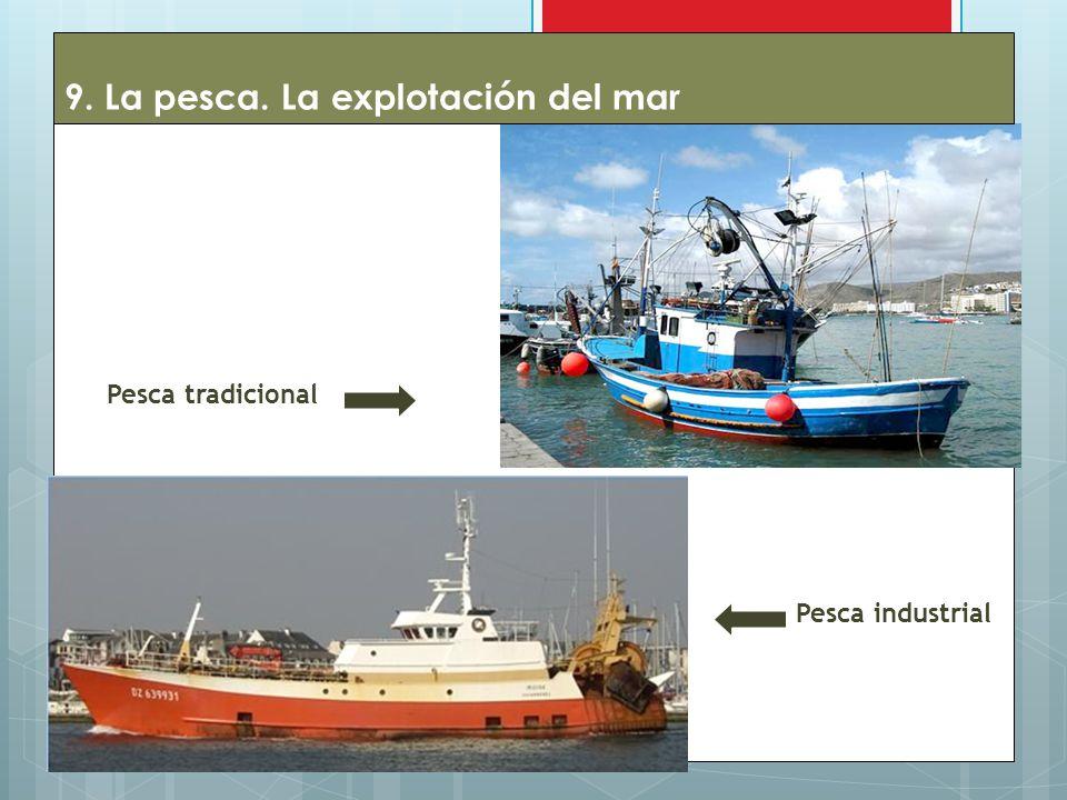 9. La pesca. La explotación del mar