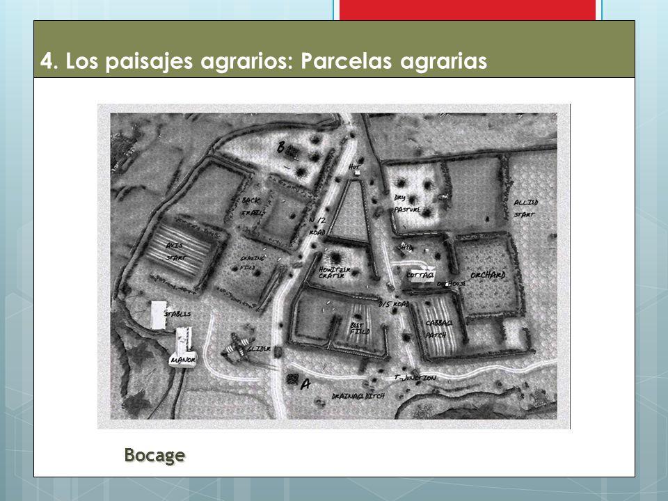 4. Los paisajes agrarios: Parcelas agrarias
