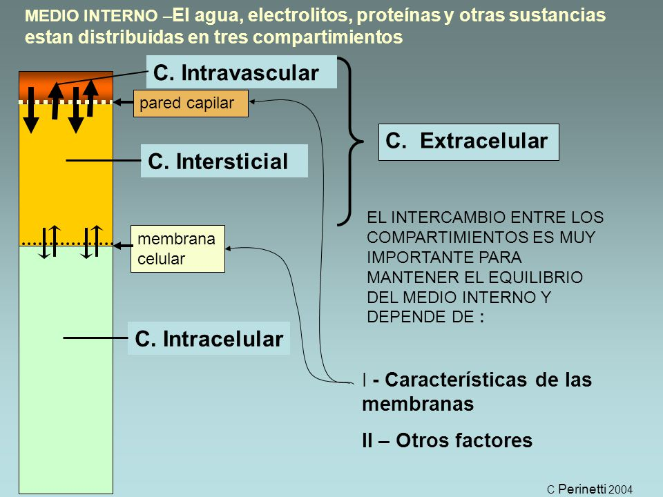 C. Intravascular C. Extracelular C. Intersticial C. Intracelular