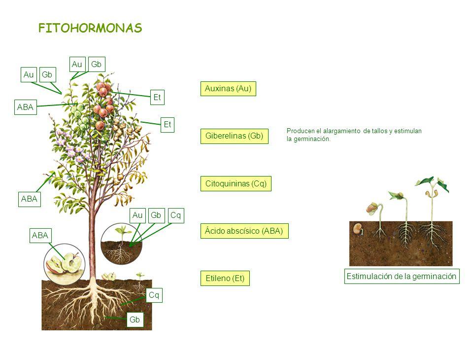 Estimulación de la germinación