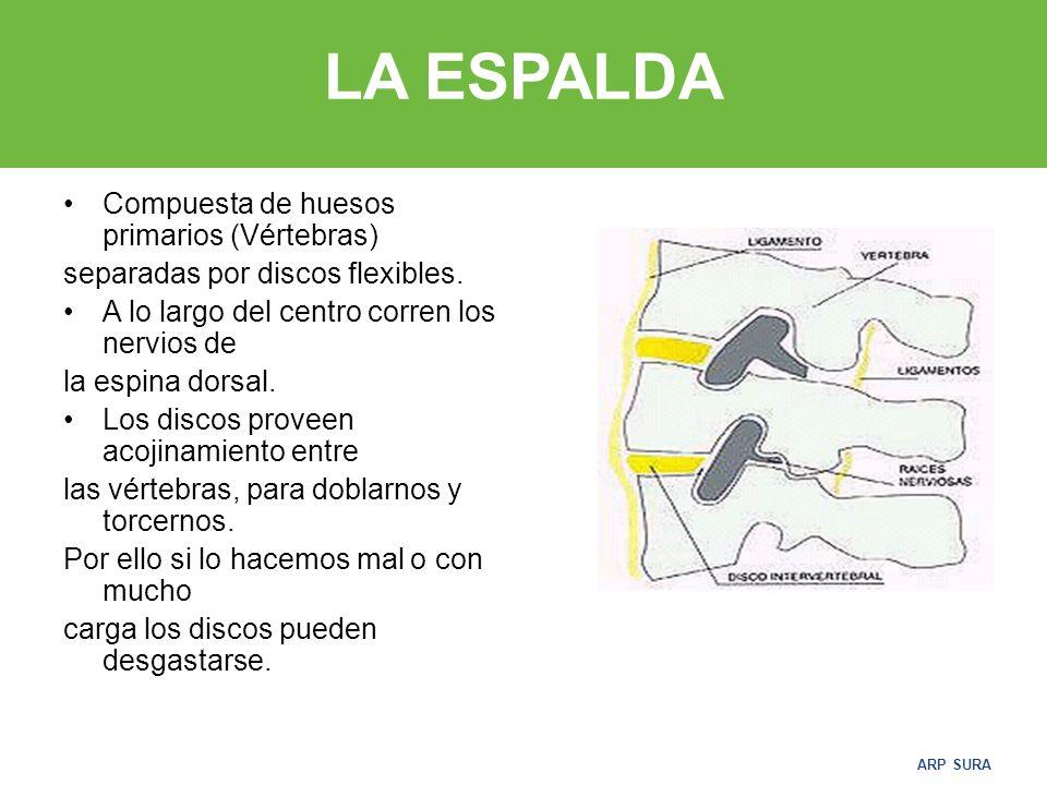 LA ESPALDA Compuesta de huesos primarios (Vértebras)