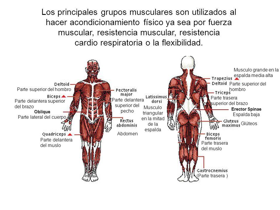 Contemporáneo Nombre De Los Músculos De La Espalda Baja Elaboración ...