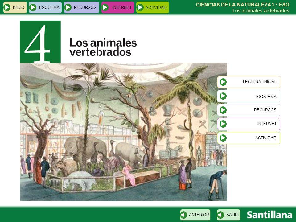 ESQUEMA CIENCIAS DE LA NATURALEZA 1.º ESO Los animales vertebrados ...
