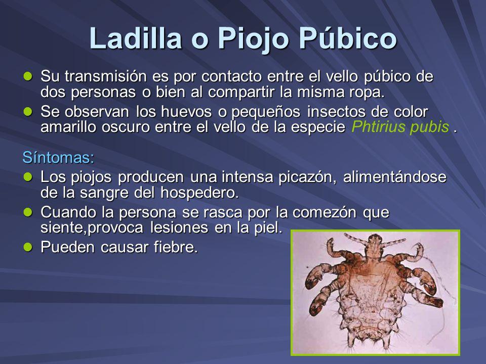 Ladilla o Piojo Púbico Su transmisión es por contacto entre el vello púbico de dos personas o bien al compartir la misma ropa.