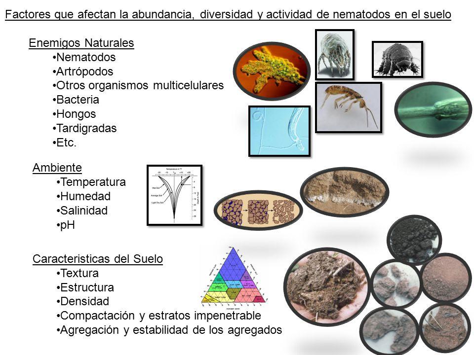 Nematolog a y ecolog a de suelos ppt descargar for Como se forma y desarrolla el suelo