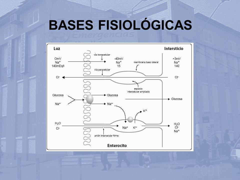 BASES FISIOLÓGICAS