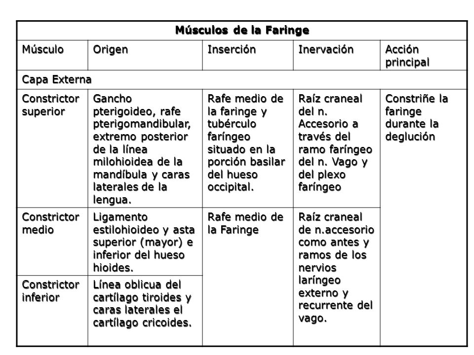 Músculos de la Faringe Músculo. Origen. Inserción. Inervación. Acción principal. Capa Externa.