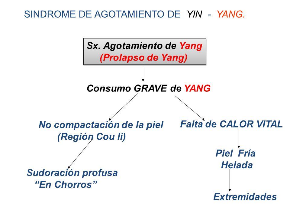 SINDROME DE AGOTAMIENTO DE YIN - YANG.