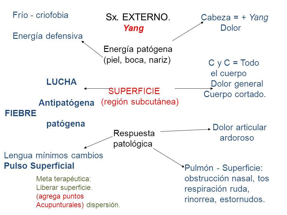 Lengua mínimos cambios Pulso Superficial Pulmón - Superficie: