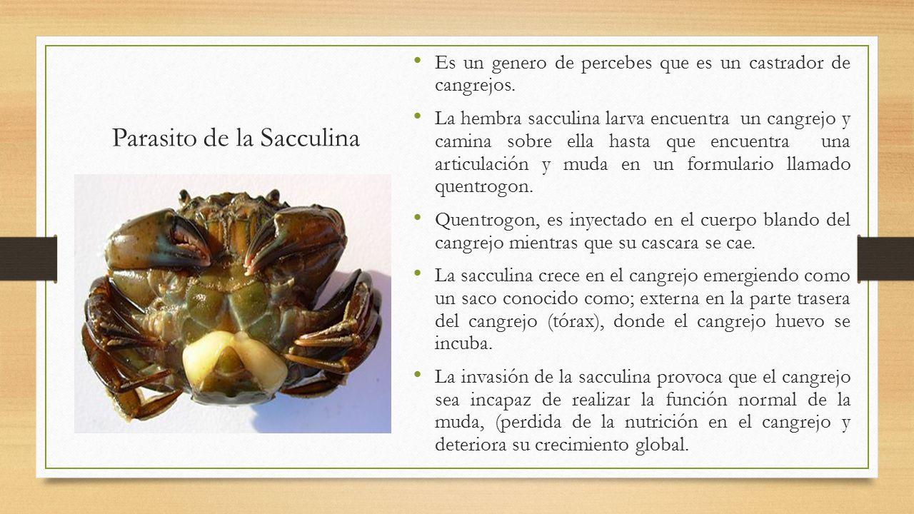 Único Diagrama De La Anatomía Del Cangrejo De Río Foto - Imágenes de ...